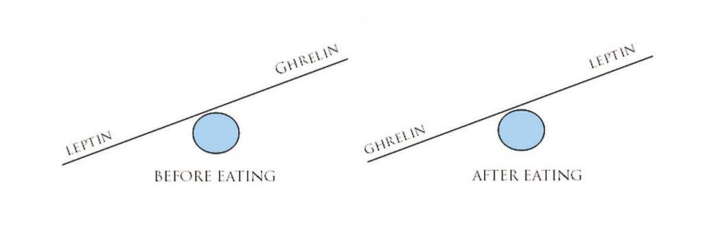 leptina y grelina antes y después de las comidas