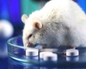 El descubrimiento de la leptina surgió de un estudio en ratones.