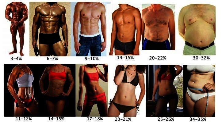 porcentaje de grasa corporal masculina femenina